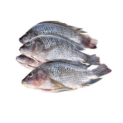 Fish & Sea Foods